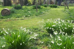 Another picture of Helen's Wildflower Meadow
