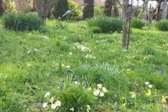 Helen's Wildflower Meadow is looking good