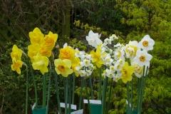 Bill's Virtual Daffodil Show
