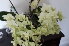 Nicky - This orchid has done wonderfully since I neglected it!